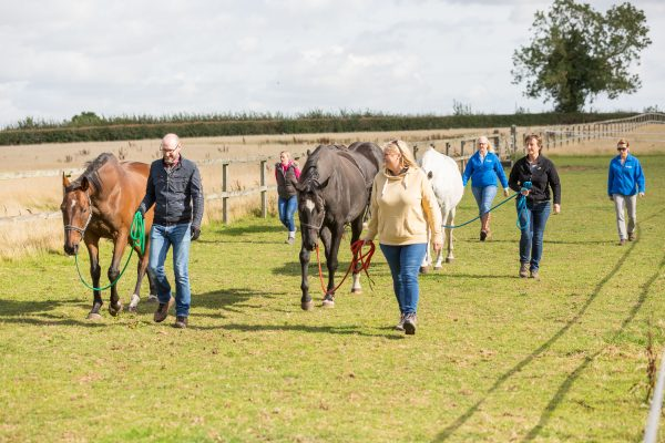 Team walking with horses